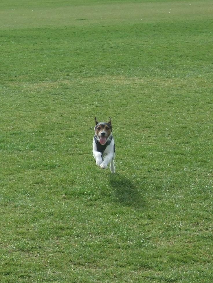 Zeus running
