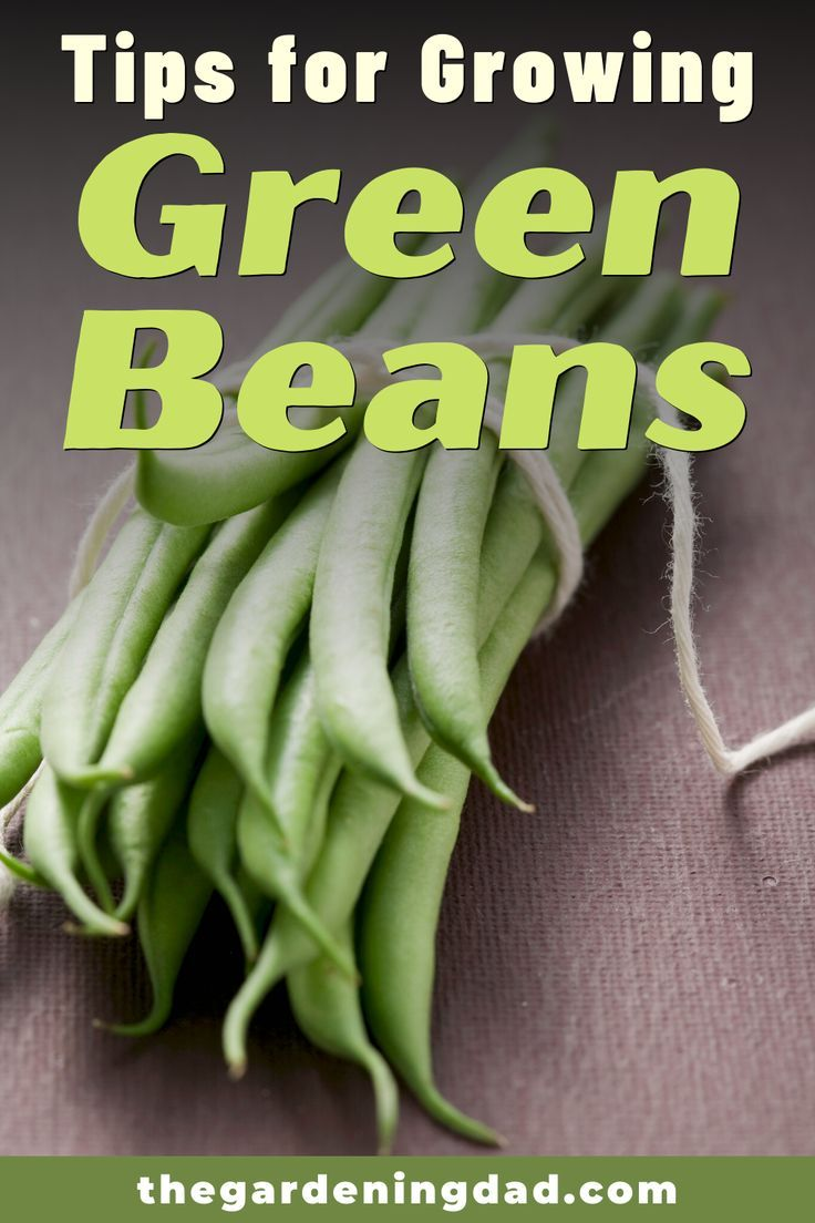 7 Simple Tips How To Grow Wax Beans The Gardening Dad Growing Green Beans Tips Grow Your Own Food