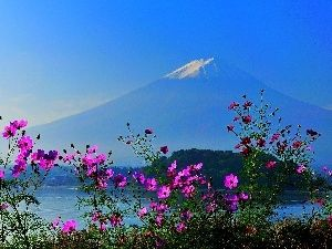 Virág, Cosmos, hegyek