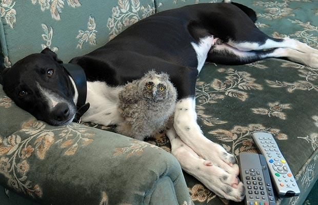 Torque the Greyhound and Shrek the Owl