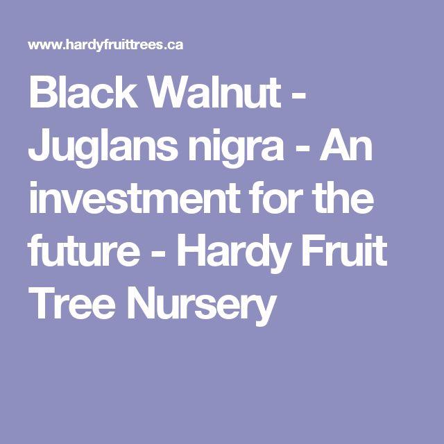 Black Walnut - Juglans nigra - An investment for the future - Hardy Fruit Tree Nursery