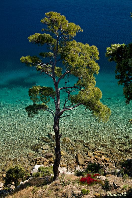 This is my Greece | Skiathos, in the Northern Sporades, is truly a paradise on earth, with lush pine forests and crystal-clear azure waters.