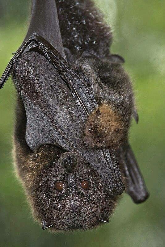 Protect our bats!