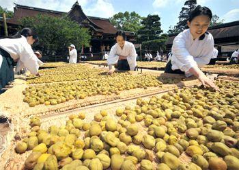 梅雨明け後の晴天の下で梅の実を広げる巫女たち(9日午前10時25分、京都市上京区・北野天満宮)