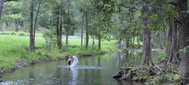 White Cedar Creek - Brisbane