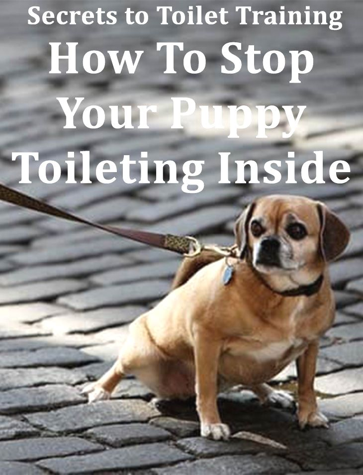 Dog Training Commands Click The Image For Lots Of Dog Obedience