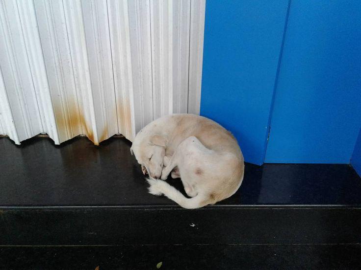 This morning  #dog #asleep outside #dell #store #mumbai #monsoons #rain