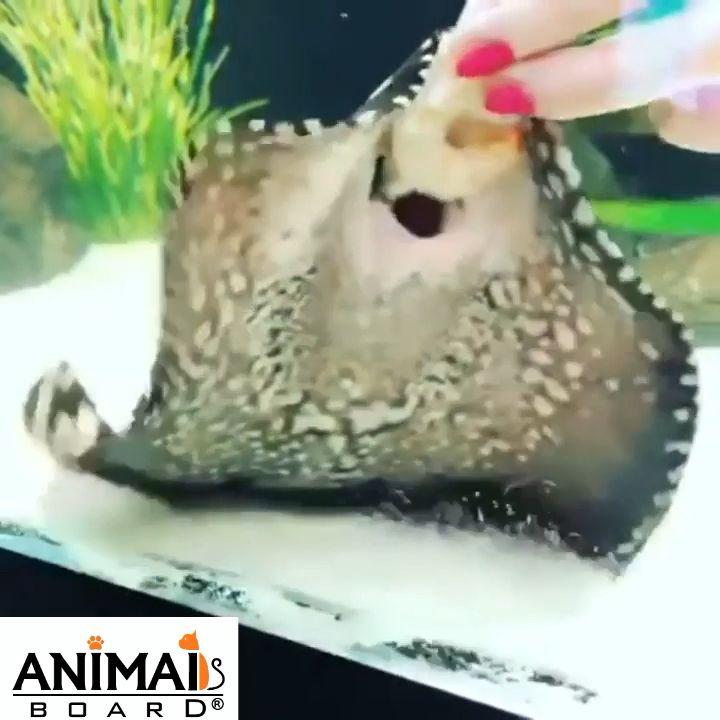 Möchtest du einen Fisch füttern?    – Tiere