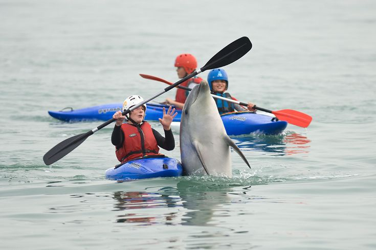 Look out!     Visiting with dolphins in the wild, where they make the choices is the right way to see them!