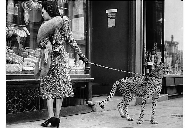 Totally sensible.  Andy Irvine: Cats, London, Leopards, Windows Shops, Pet Cheetahs, Black, Photography, Phylli Gordon, Animal