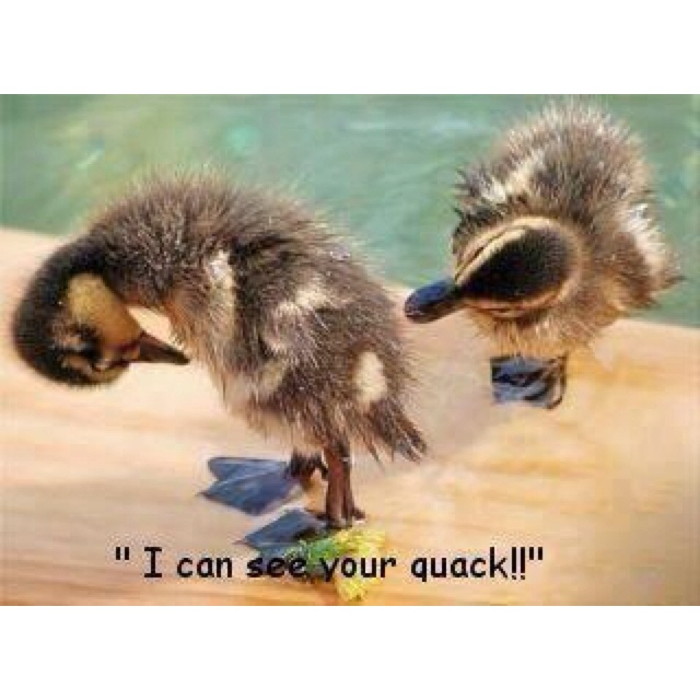 This jus makes me giggle 😁: Dogs Pics, Baby Ducks, Funny Cat, Quack, Giggles, Too Funny, Funny Stuff, Humor, Funny Animal