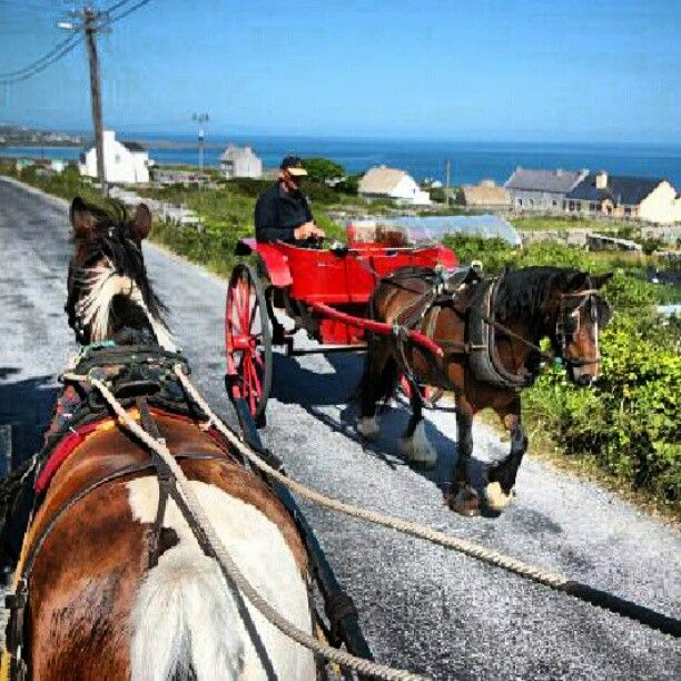 Il Reporter with a #pony and #trap discovering #Inishmore #Aranislands #Ireland #worldplaces #animal #transportation #travel #ilreporter