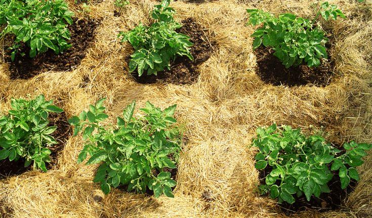 Экология потребления. Усадьба: Плодородная почва делается настолько просто, что в эту простоту очень трудно поверить, поэтому мы всё ещё ищем волшебное удобрение...