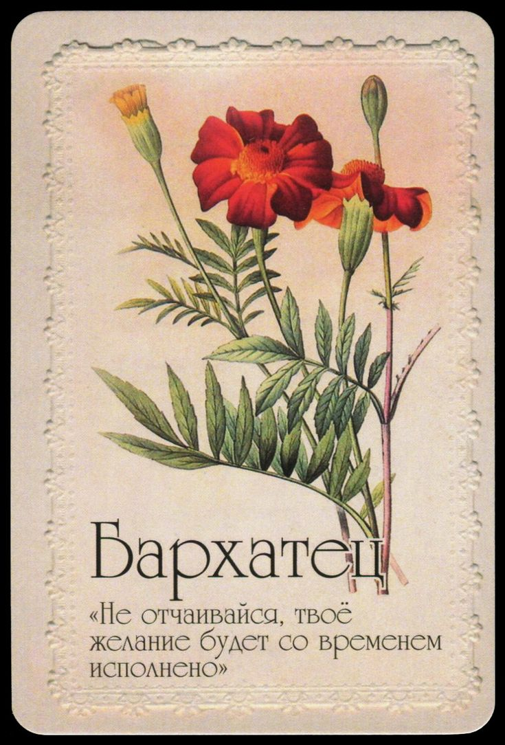 Открытка язык цветов