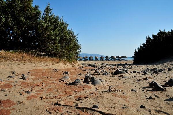 Stony path to the beach