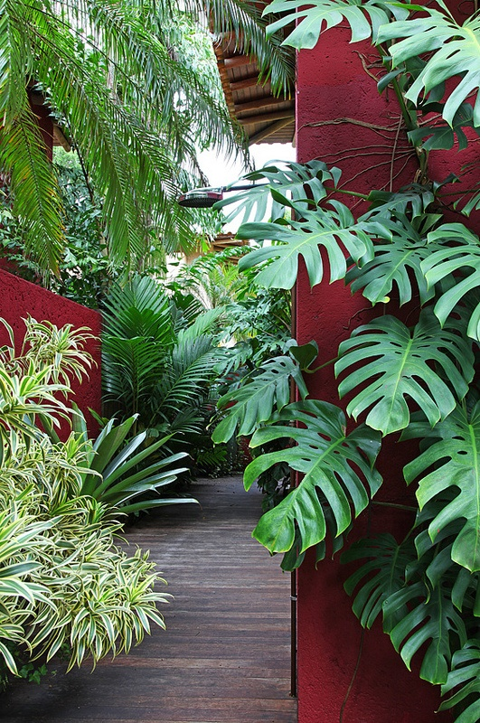 Note the use of shape and colour with the plants around the area, with their natural qualities enhanced by the solid and surprisingly warm colour behind them.