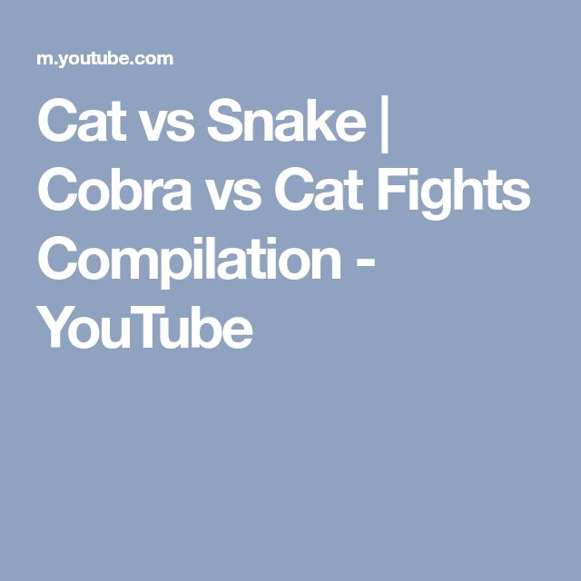 Youtube Cat Fights Snake