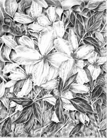 Star Power graphite floral by Brenda Hill