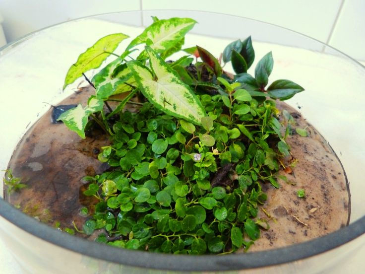 Aqua-terrarium / Wabi-kusa done yesterday july 13 2014, let's see how it will develop