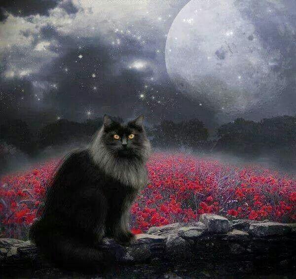 Byron  Cats