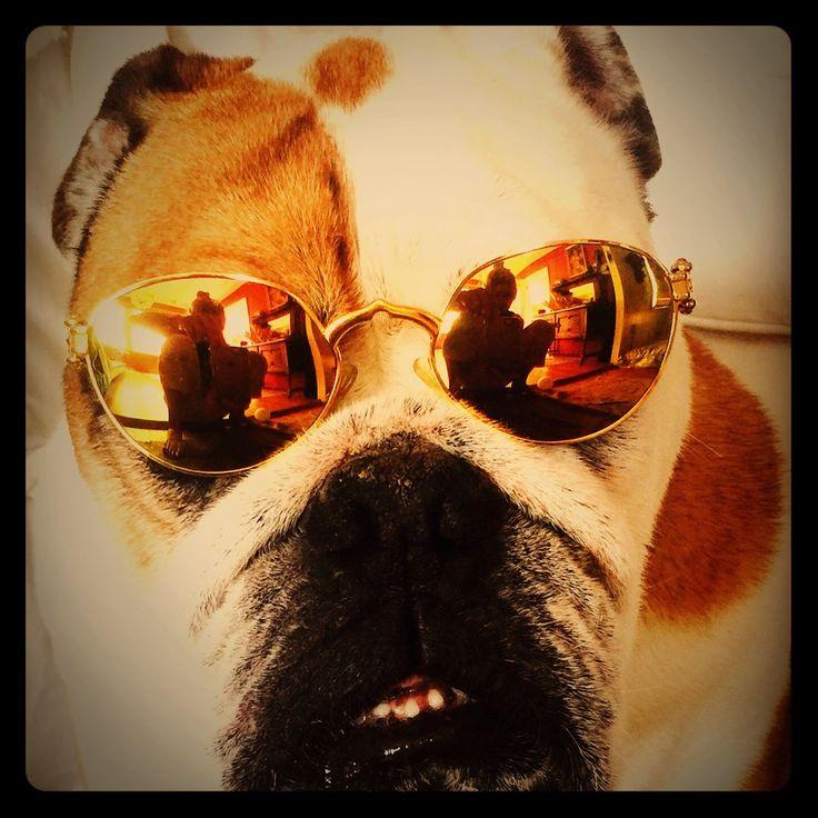 Philippe Charriol Vintage Gold Sunglasses~