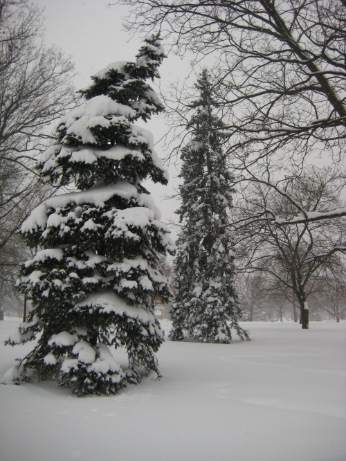Snow in London, Ontario. A lot of it!