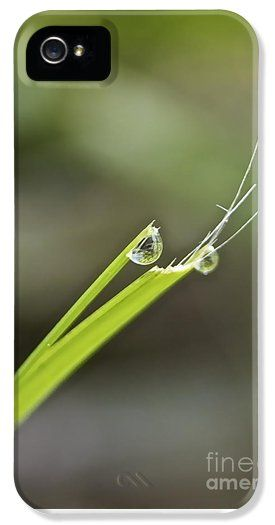 Rain drops on blades of grass iPhone 5 Case / iPhone 5 Cover for Sale