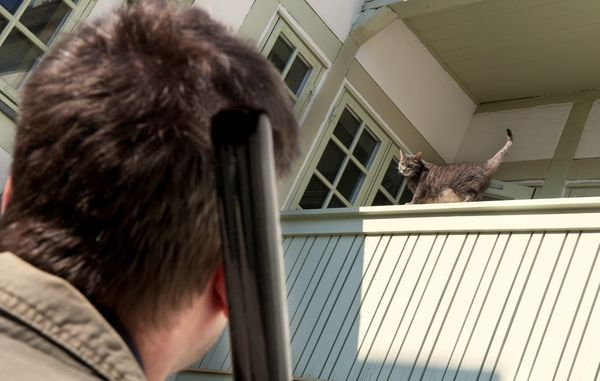 Må naboen skyde din kat?