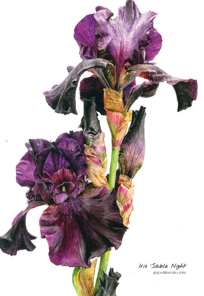 Fleur Aquarelle Realiste Peinture Art Mural Tulipes Rose Pintura