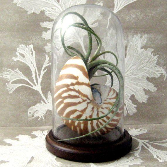 69 best tillandsia a k a air plant designs images on for Nautilus garden designs