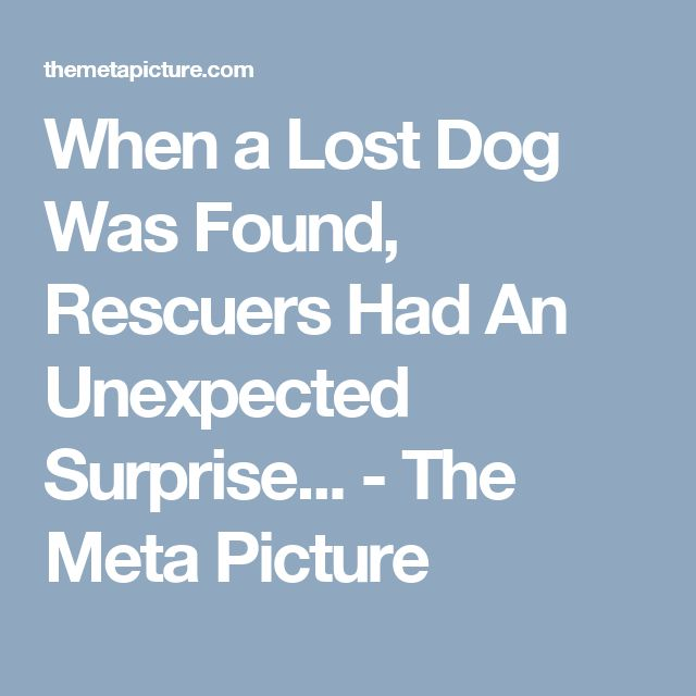 When a Lost Dog Was Found, Rescuers Had An Unexpected Surprise... - The Meta Picture