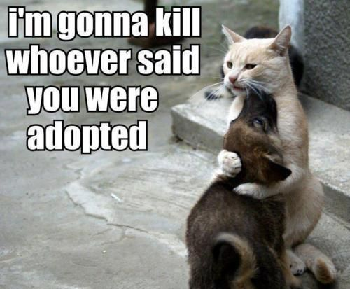 Funny Kittens And Puppies | ... my real son Not Adopted Funny Cat and DOg - Cute Funny Dogs Pictures