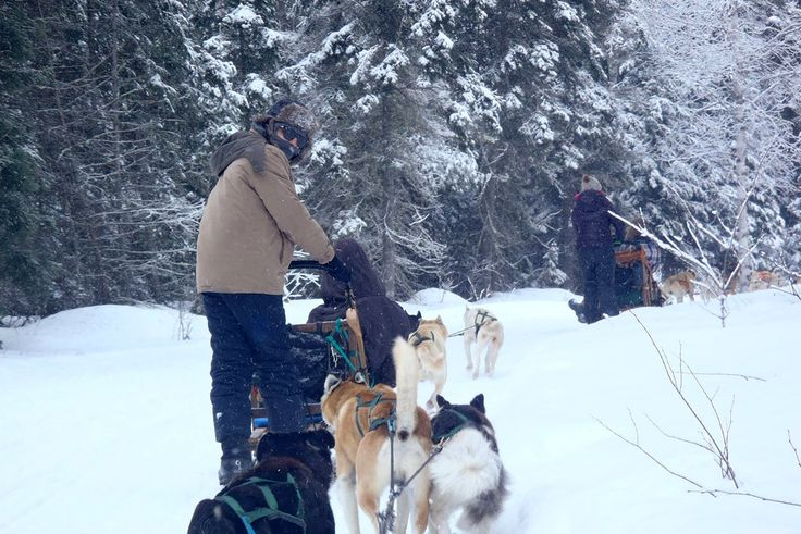 Dog sledding with huskies in Canada. What an adventure!
