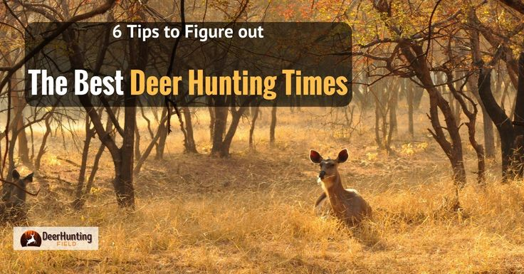 There's a lot of planning that goes into hunting, and one of the key factors you'll need to figure out is what the best deer hunting times are.