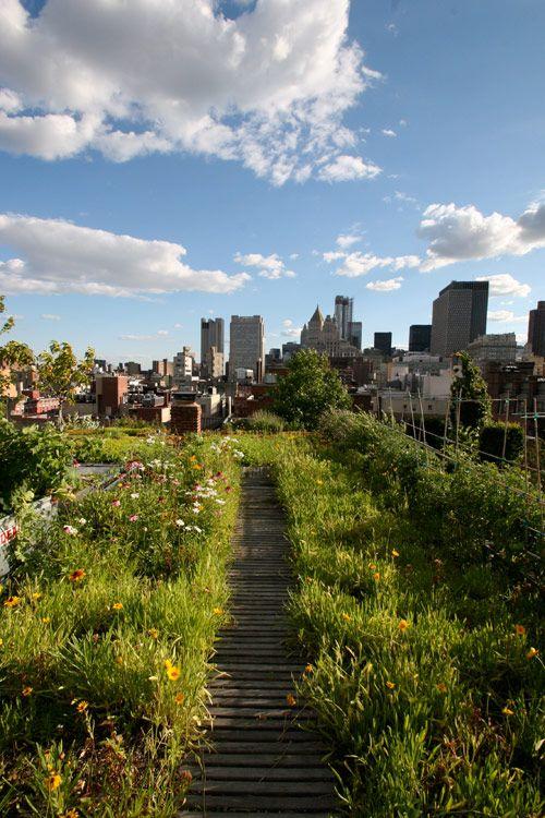 Les 176 meilleures images propos de terrasses balcons sur pinterest pla - Toiture vegetalisee paris ...