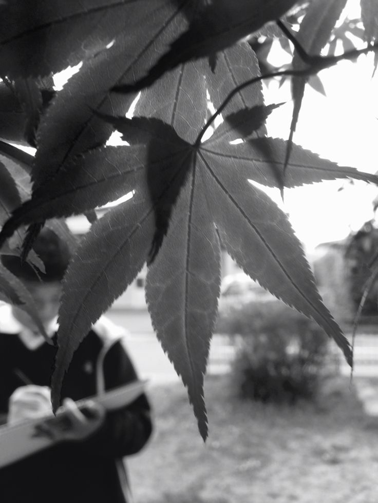 Mono picture of maple leaf.
