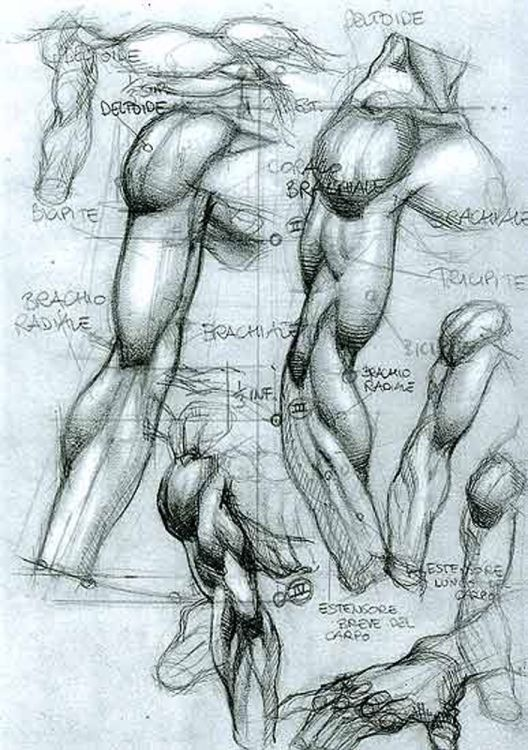 pillow drawing realistic. how to draw the human body - study: male arms muscle structure for comic / pillow drawing realistic
