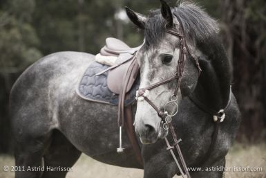 Looks like Riptide, maybe the cutest pony ever and #winner of the bareback jump off.