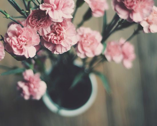 Nelken FotoRosa Blumen Blumen Vase Frühling von dullbluelight