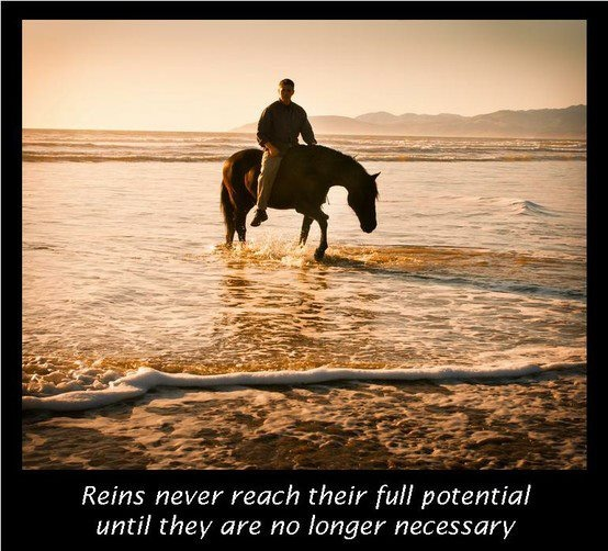 Natural Horsemanship, it's the only way.