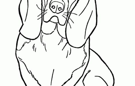 dog basset coloring pages - photo#14