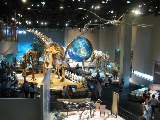 Book your tickets online for Dallas World Aquarium, Dallas: See 2,817 reviews, articles, and 1,238 photos of Dallas World Aquarium, ranked No.8 on TripAdvisor among 210 attractions in Dallas.