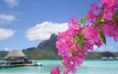 trópusi sziget bougainvillea bora bora stég és moló tenger francia polinézia nyár hegy