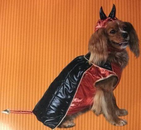 401 best Pet Clothing images on Pinterest | Pet costumes, Animal ...