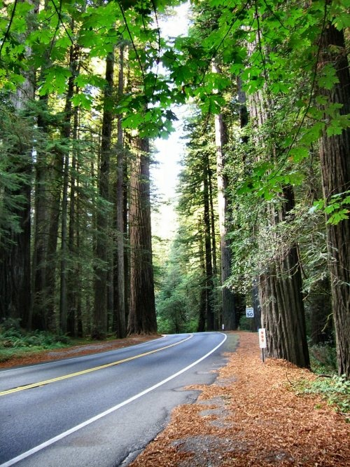 Oregon - driving through the woods near the redwood forests in southern Oregon