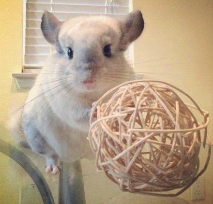 """""""#cute #rabbit"""" NOT A DAMN RABBIT. Hehehe ^-^"""