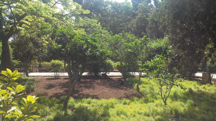 Two peacocks in the beautiful San Anton Gardens in Attard