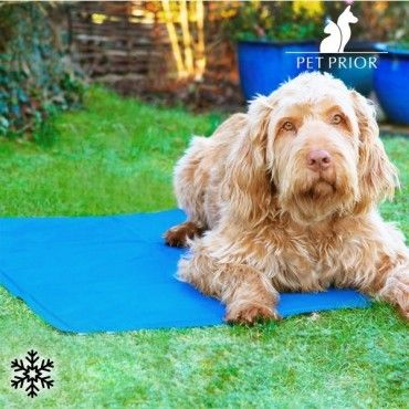 If you want the pets at home to spend the summer the best possible way, don't miss thecooling mat for pets. This mat will gradually cool and help your pet to adjust its body temperature...