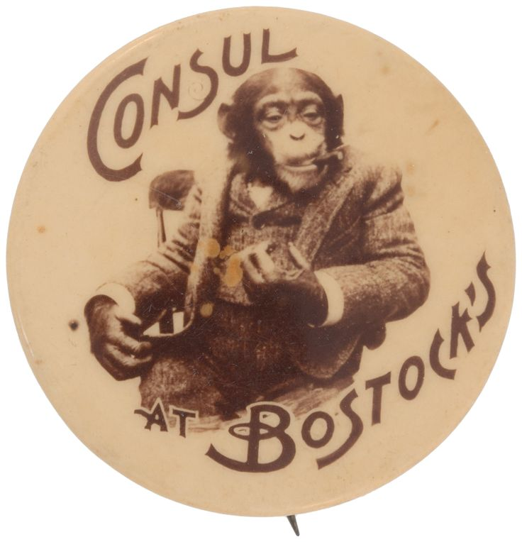 "Hake's - FAMOUS CIGAR SMOKING CHIMPANZEE BUTTON TITLED ""CONSUL AT BOSTOCK'S."""