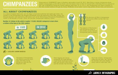 Great interactive infographic about chimpanzees from the Jane Goodall Institute and Disney Nature....shocking to click on 'in 2012' to see the decimation of chimp populations.  Launch infographic: http://awesome.good.is/transparency/web/1204/All-About-Chimpanzees/flash.html
